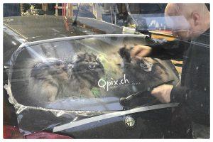 Lochfolie Hundefotografie Autoheckscheibe