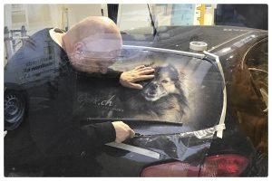 Hundefotos auf einer Autoheckscheibe